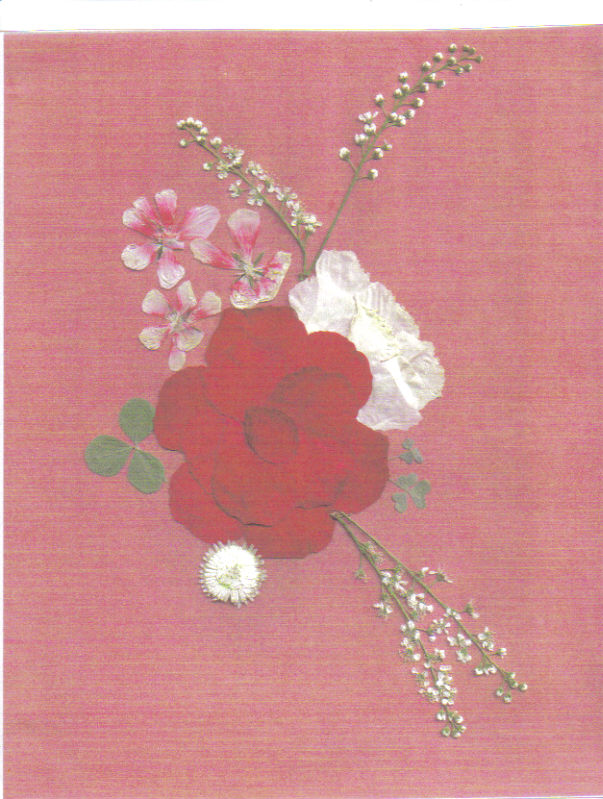 pressed flower red collage