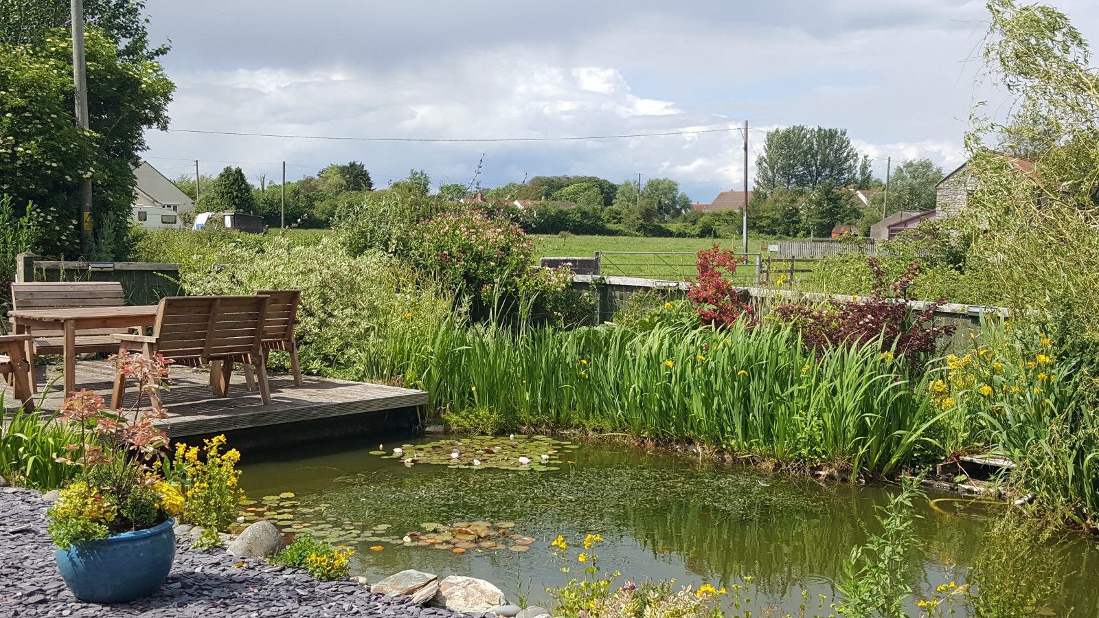 Beautiful Somerset koi pond, garden and farmland scenery