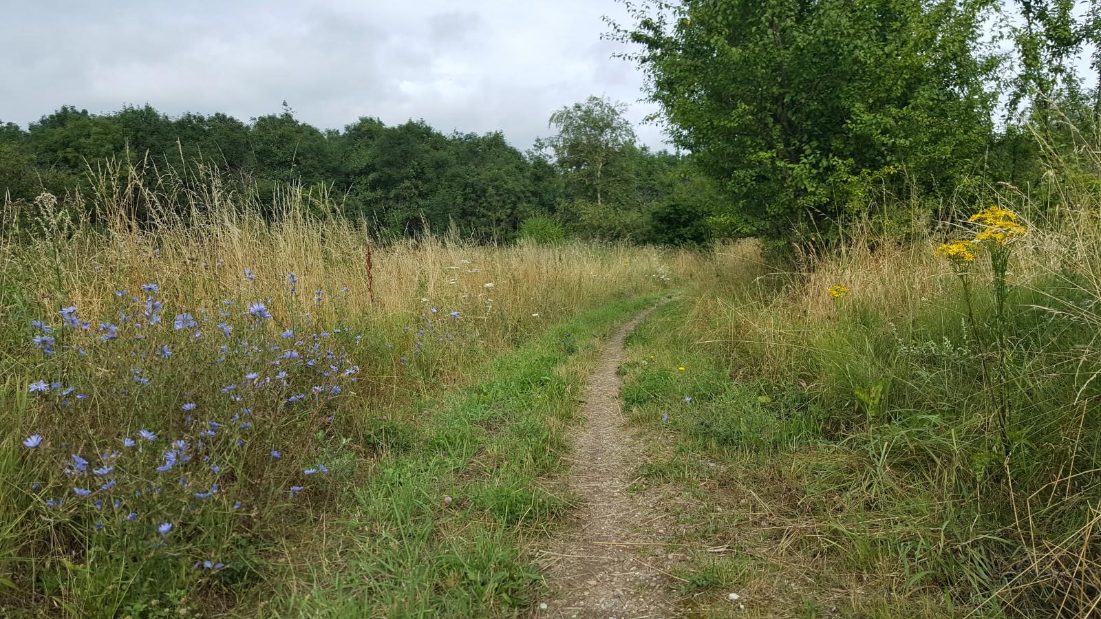 The path through the woods! A quiet walk through some fallow farmland in Denmark