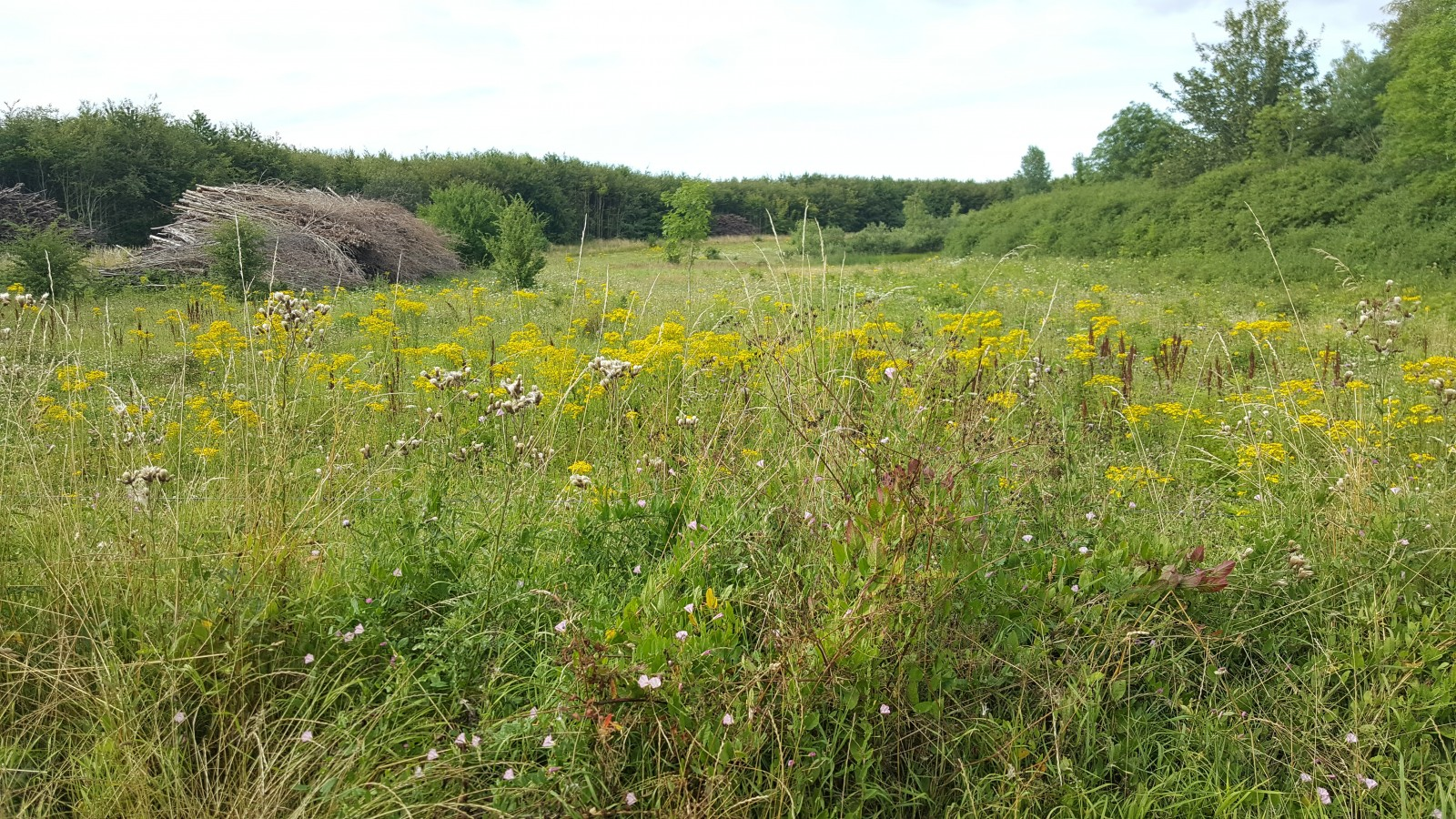 A fallow field full of beautiful wildflowers - or weeds, if you prefer!