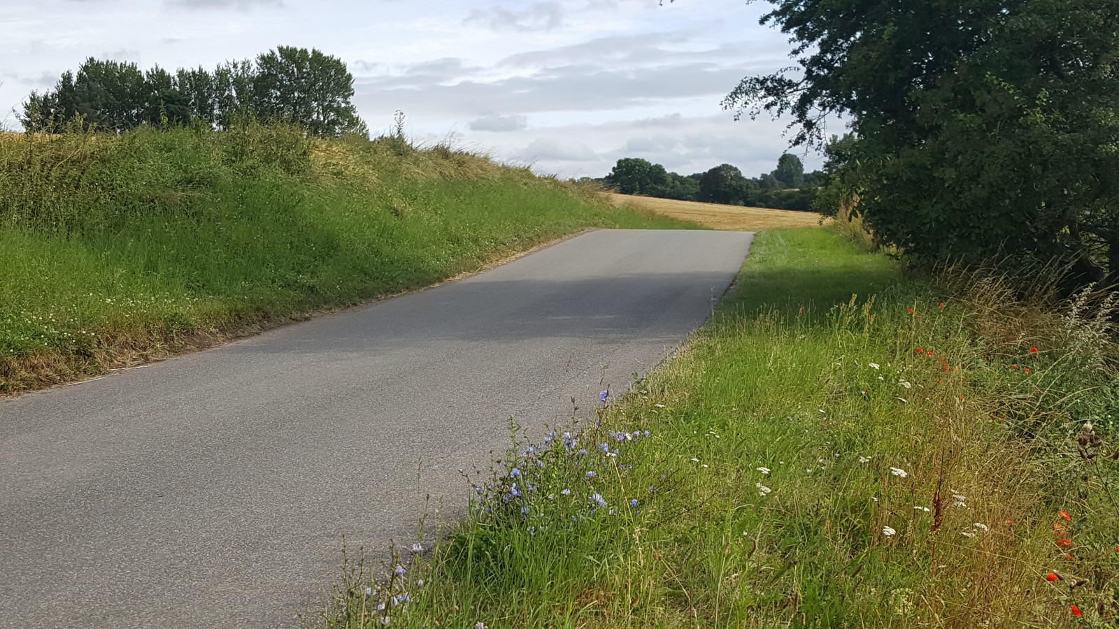 The long and not so windy road to the pub! Wildflowers growing alongside a beautiful country lane in Denmark