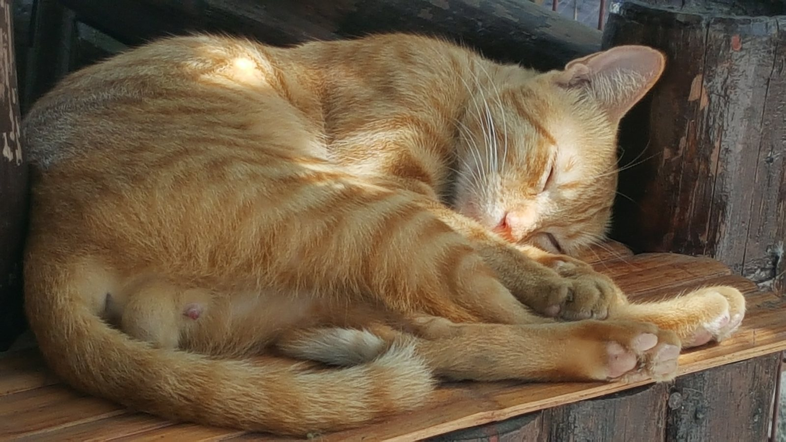 Young ginger cat fast asleep on a sunny afternoon