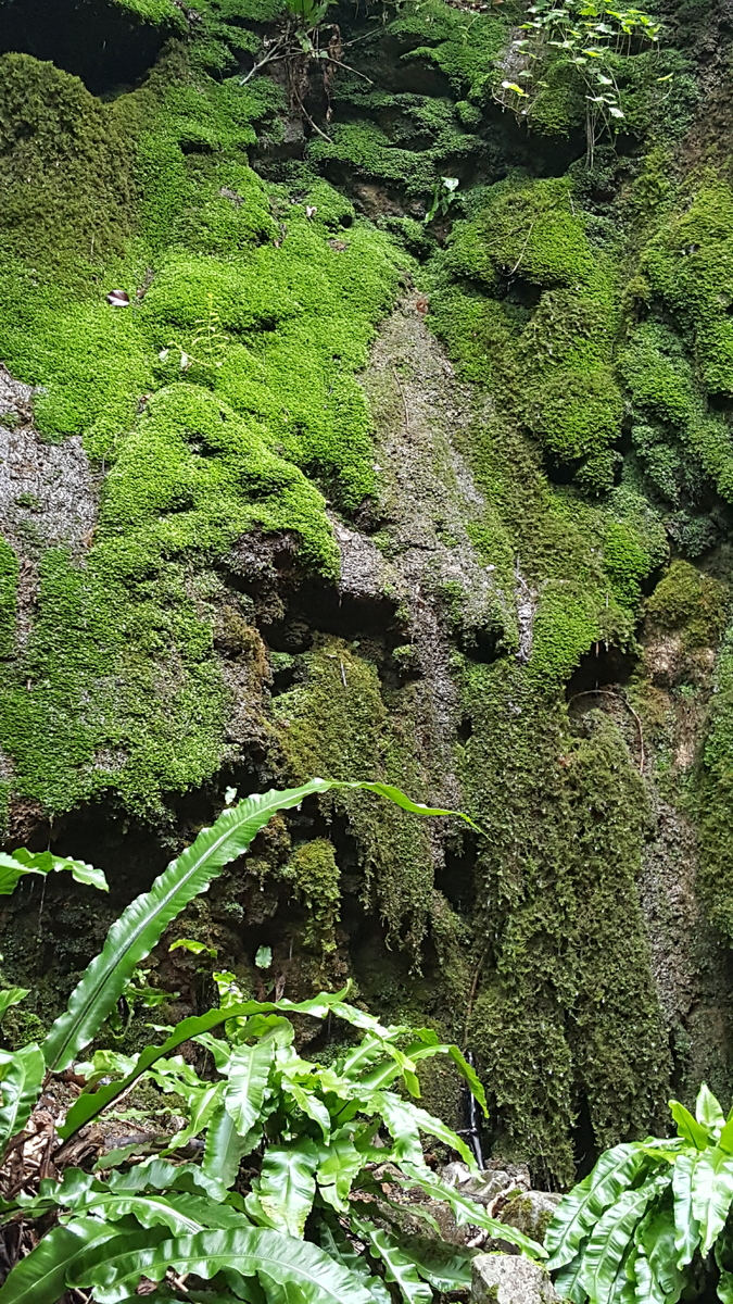Mosses and ferns dripping with water outside the Northern portal of Shute Shelve Tunnel