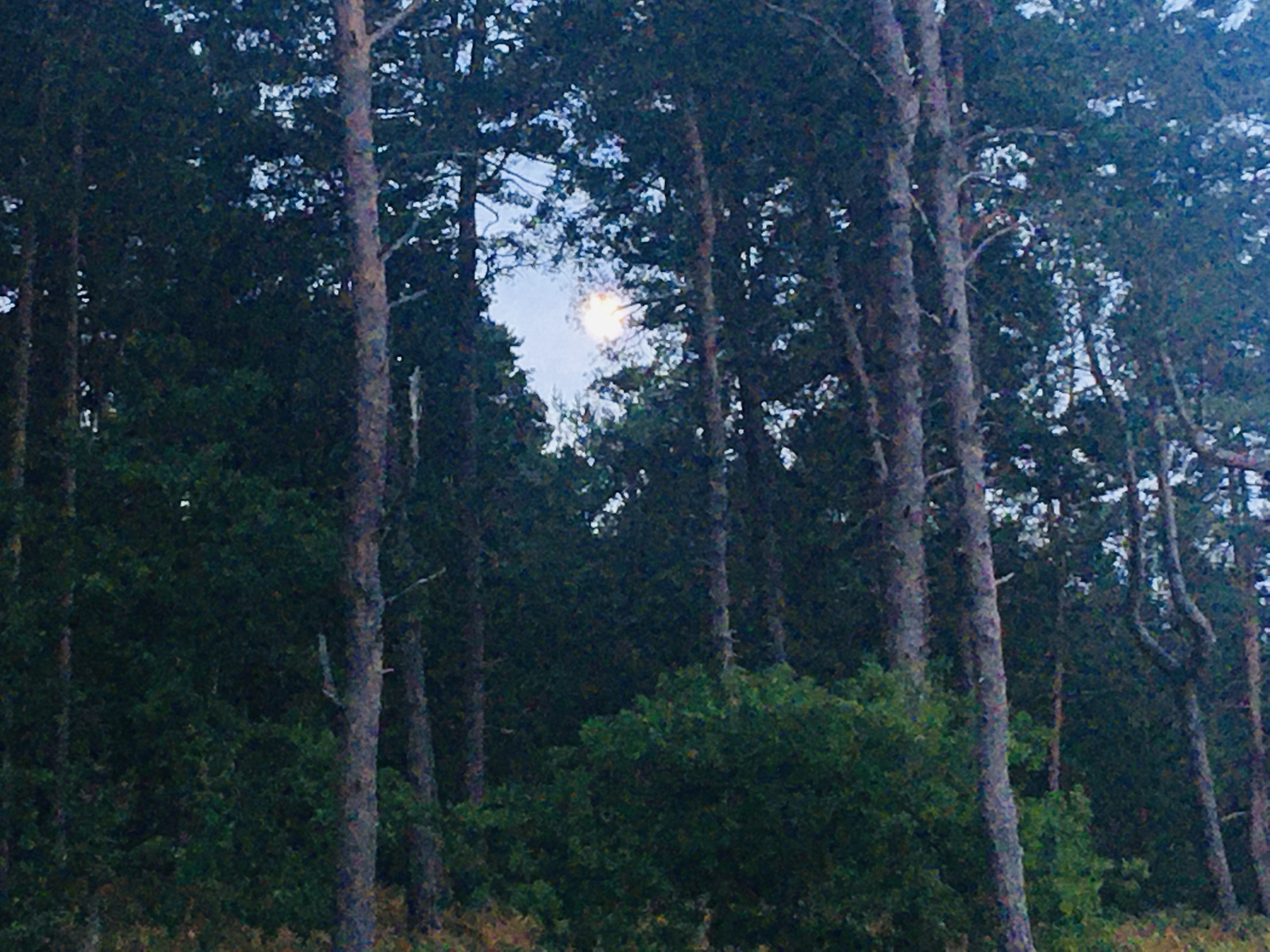 The Moon framed through the trees.