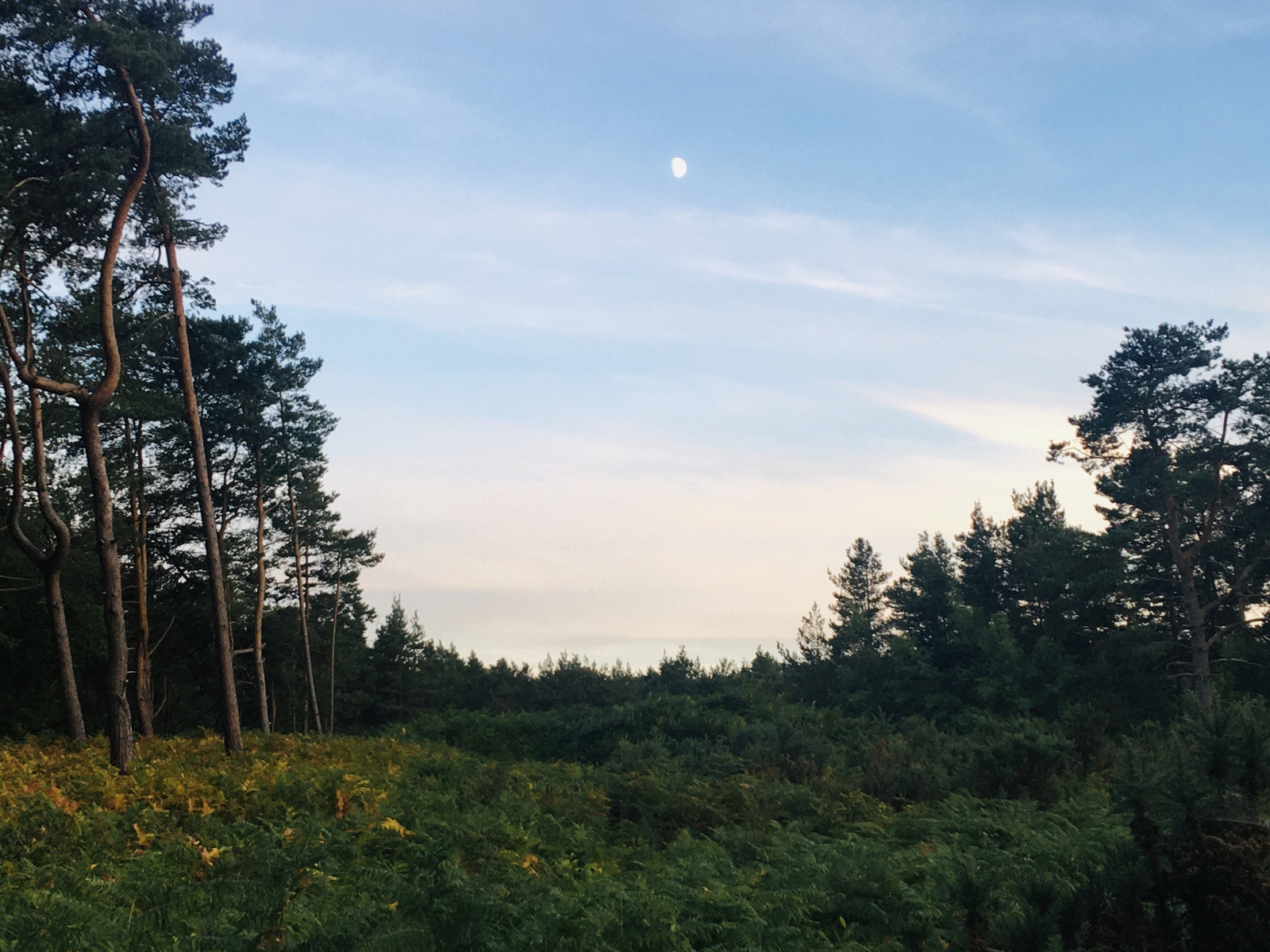 Moon over the Hogmoor Inclosure