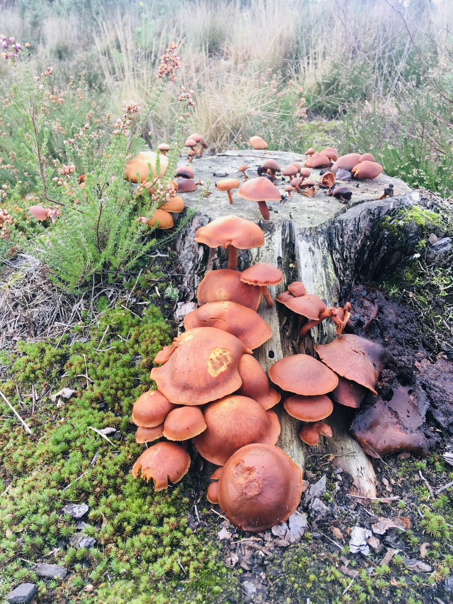 Fungi and and old tree stump