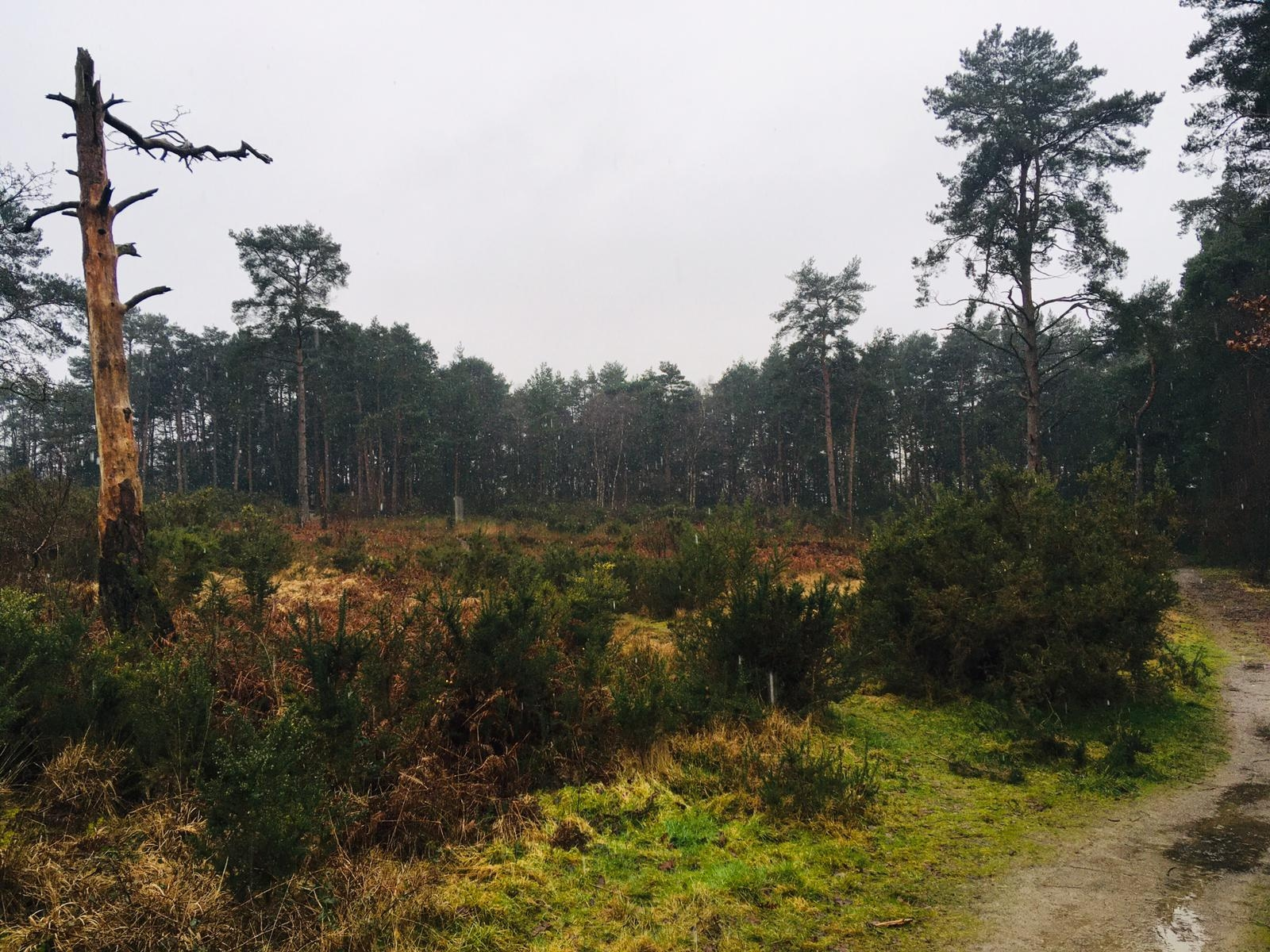 Late January in the Hogmoor Inclosure
