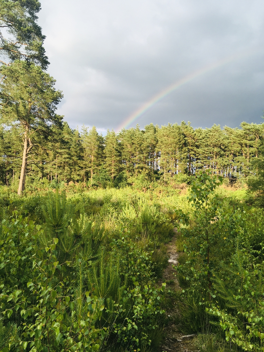 Rainbow in the Hogmoor Inclosure